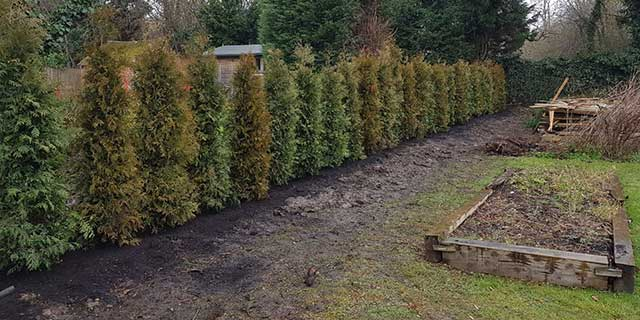 Garden cleared with newly planted hedges
