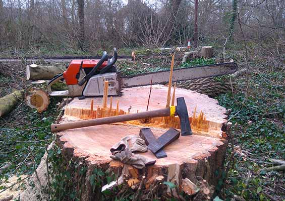 Tree stump being removed with tools