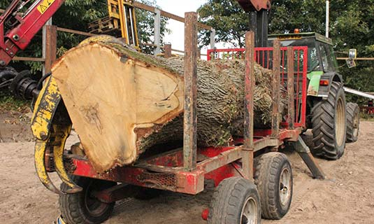 Tractor and trailer with tree loaded on