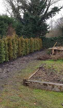 Garden after clearance and hedge cutting and care
