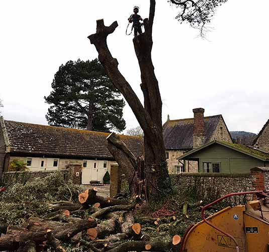 Man in a tree felling it and people clearing land