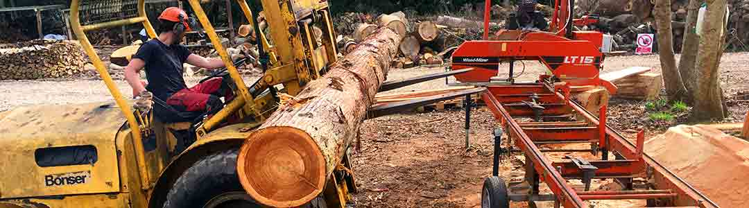 Heavy duty machinery and operative lifting tree trunk