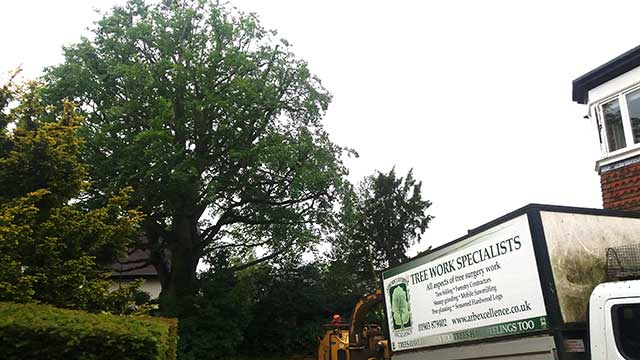 Arboricultural Excellence truck and trees